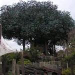 La Cabaña de los Robinsones Suizos en Disneyland París