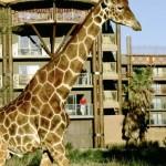 Disney's Animal Kingdom Lodge en Disney World