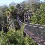 Wild Africa Trek, excursión desde Animal Kingdom de Disney