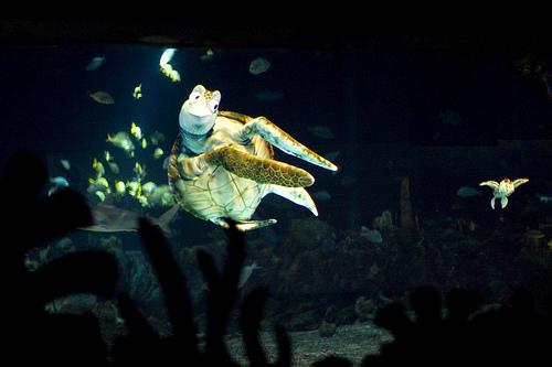The Seas with Nemo & Friends en Epcot