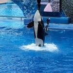 SeaWorld, el Oceáno en Disneyland Orlando